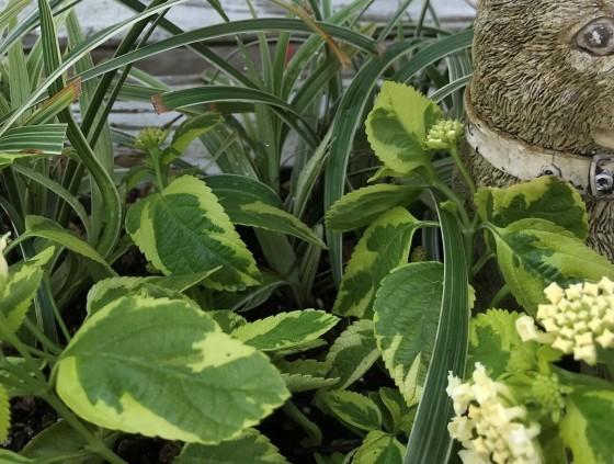 お花の植え替えいろいろ~~ - ♪ 路地裏の 小さな庭と雑貨屋♪♪♪
