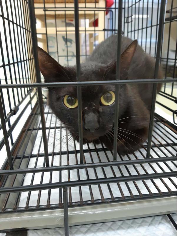 C市Ko町にて、ママ猫と子猫3匹の捕獲中 - NPO法人 府中猫の会
