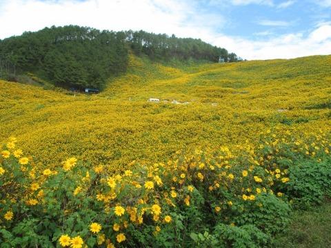 チェンマイの街や野を彩る花々とそのエピソード(第10回)_d0159325_21283353.jpg