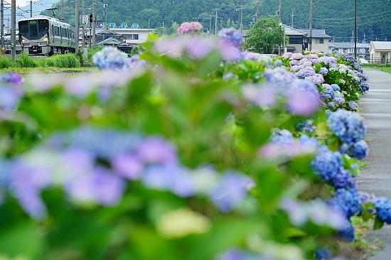 6月16日 梅雨時期の彩りを眺めて_f0037227_21100233.jpg