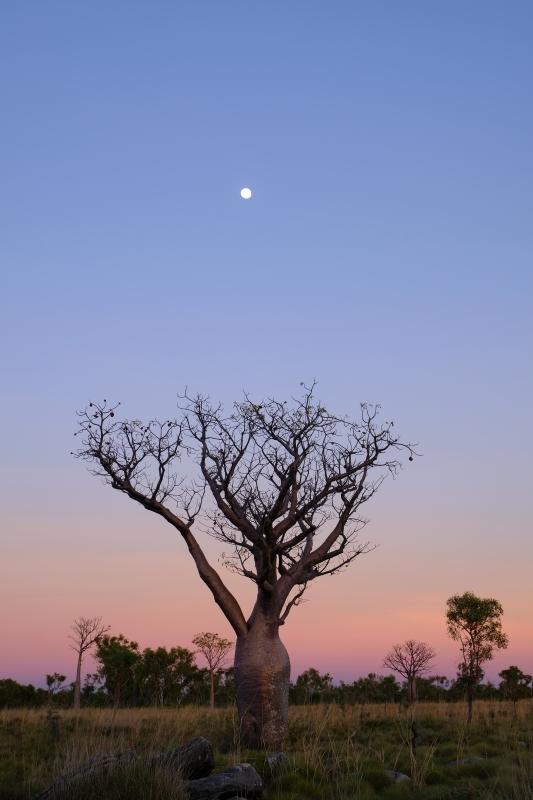Moon ,Kimberly_f0050534_16035622.jpg