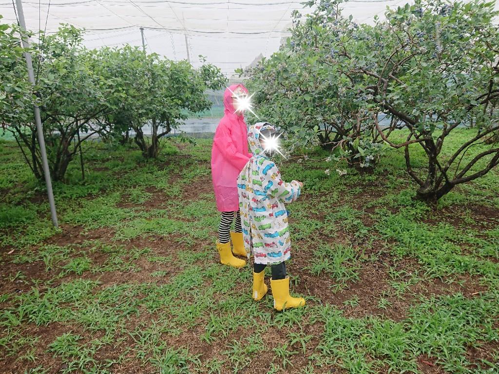 雨の中でブルーベリー狩り_f0323446_22365044.jpg