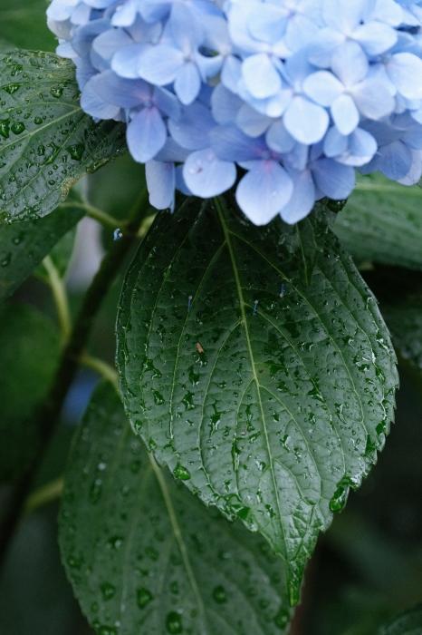 多摩川台公園(大田区)  緊急事態宣言下の2021年6月19日(土)_c0080357_15510784.jpg