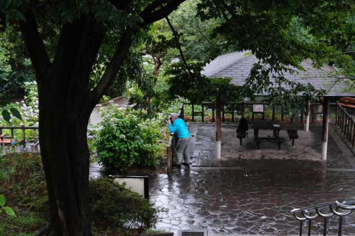 多摩川台公園(大田区)  緊急事態宣言下の2021年6月19日(土)_c0080357_15515038.jpg