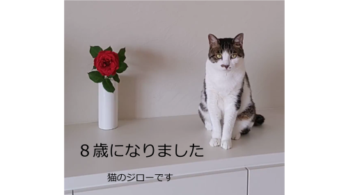 我が家の猫ジロー_d0034659_09310422.png