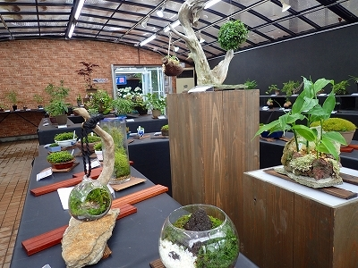 雨似合う古典植物と山野草展_f0203094_10172693.jpg