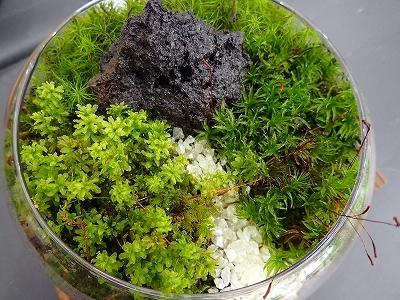 雨似合う古典植物と山野草展_f0203094_10202730.jpg