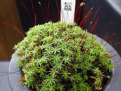 雨似合う古典植物と山野草展_f0203094_10265386.jpg
