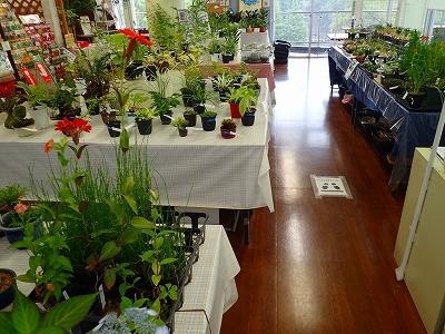 雨似合う古典植物と山野草展_f0203094_10332509.jpg