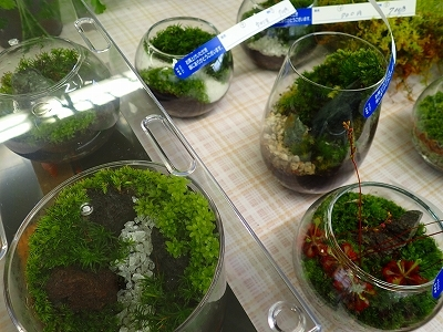 雨似合う古典植物と山野草展_f0203094_10383626.jpg