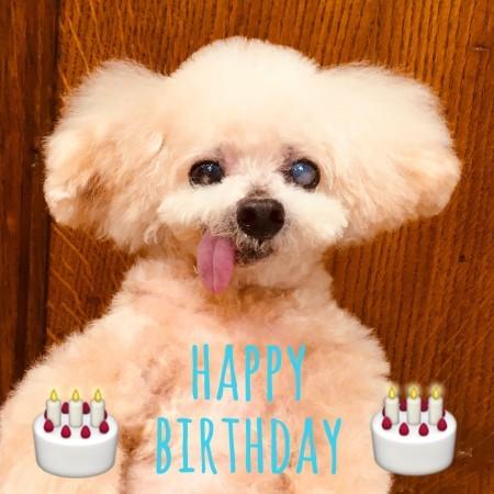 ☆ Happy Birthday ・ ポッシュくん ☆_d0060413_15200286.jpg