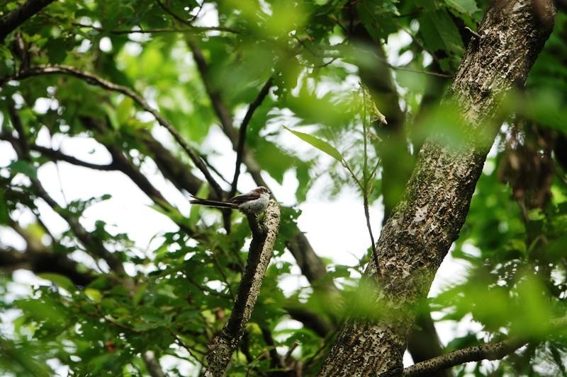 野鳥トレ 266 神戸森林植物園_b0227552_19432449.jpg