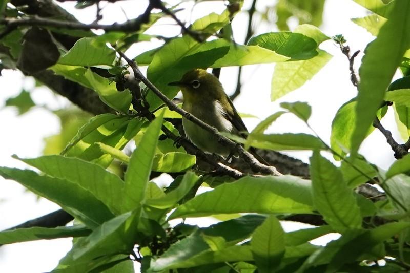 野鳥トレ 266 神戸森林植物園_b0227552_19433816.jpg