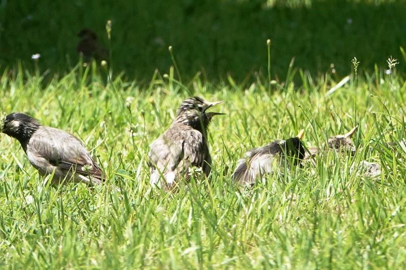 野鳥トレ 266 神戸森林植物園_b0227552_19440400.jpg