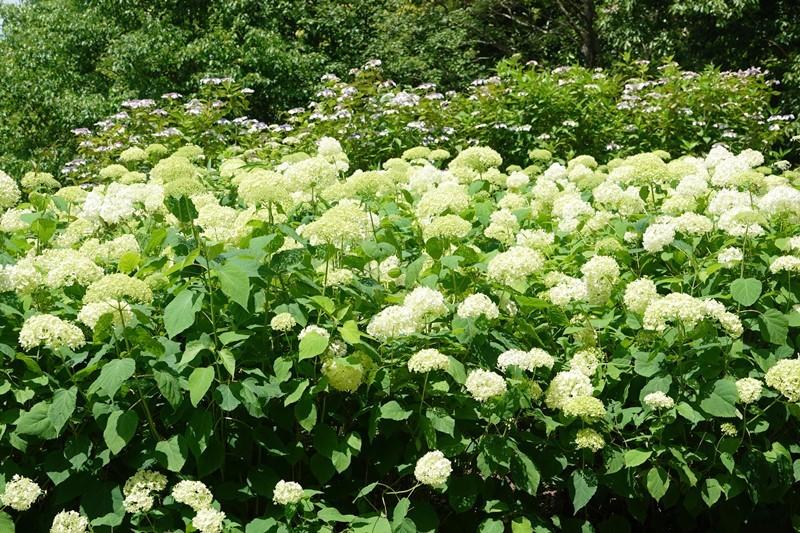 野鳥トレ 266 神戸森林植物園_b0227552_19441776.jpg