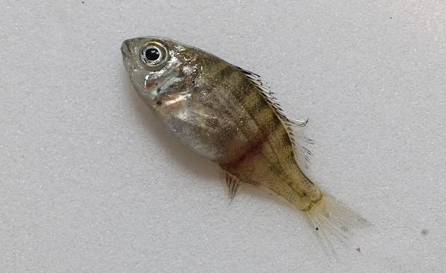 6月14日の水生生物調査_e0046474_09223827.jpg