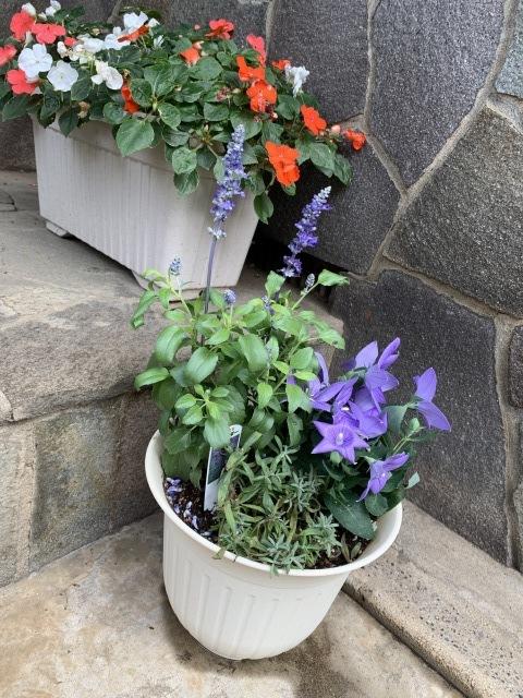 お庭いろいろ♪_f0305995_22200124.jpg
