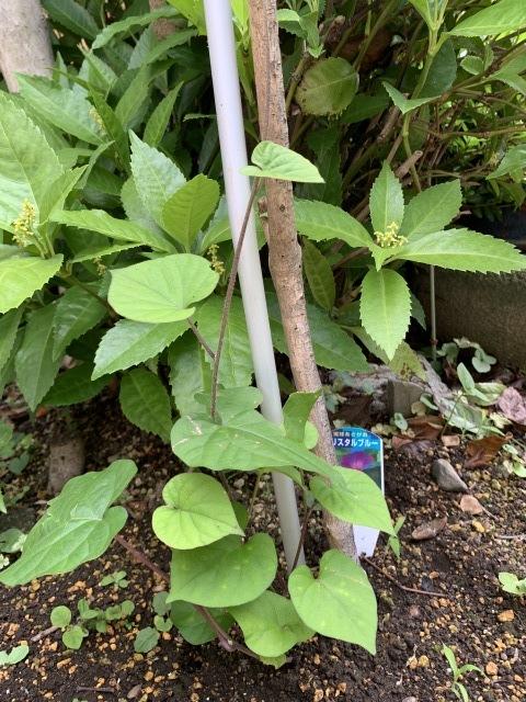 お庭いろいろ♪_f0305995_22205534.jpg