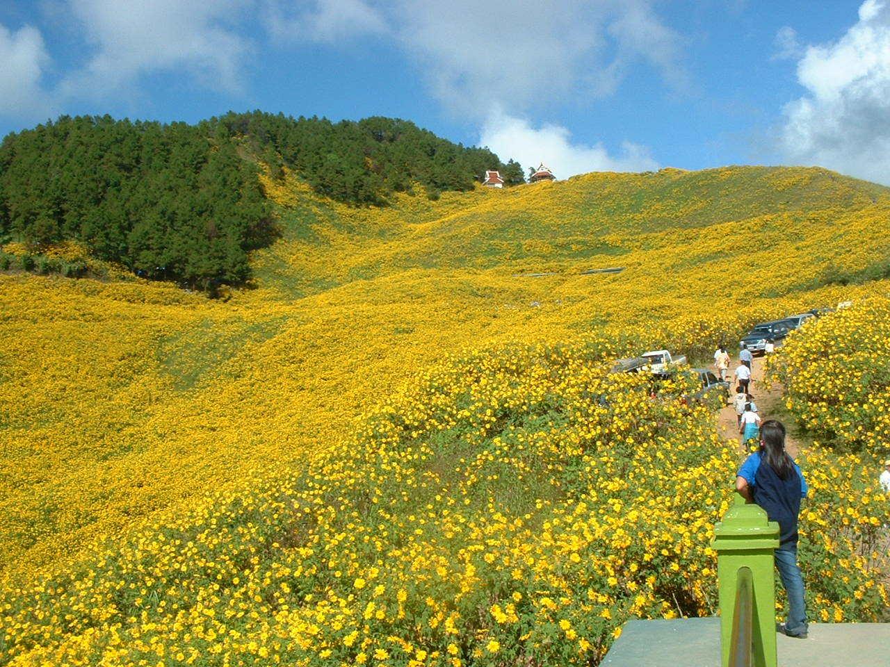 チェンマイの街や野を彩る花々とそのエピソード(第9回)_d0159325_17254388.jpg