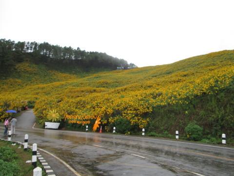 チェンマイの街や野を彩る花々とそのエピソード(第9回)_d0159325_17305406.jpg