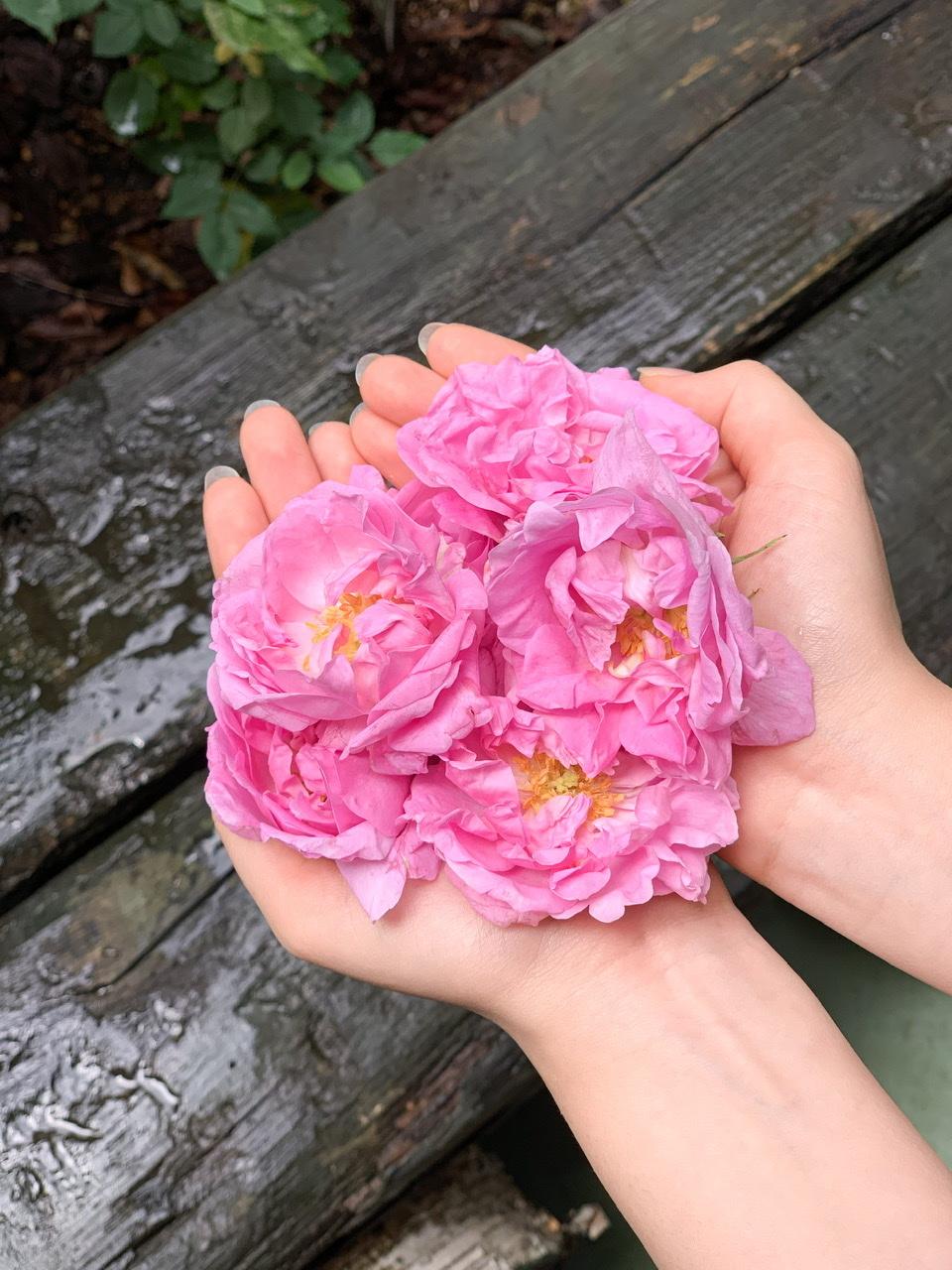 薔薇仕事④ 岩手県久慈市のダマスクローズ_e0404027_06463050.jpeg