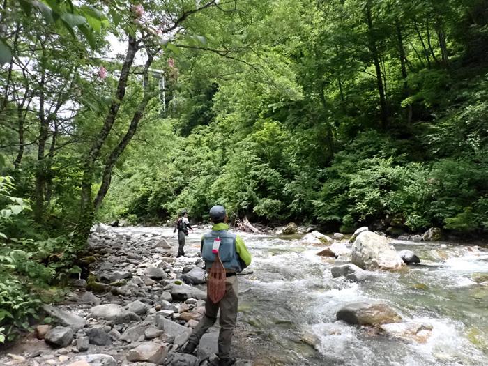 父の日の付き合いはブナの森へ_c0120834_17083998.jpg