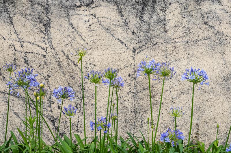 Wall  ・・・壁の花・・・_e0413469_06532137.jpg