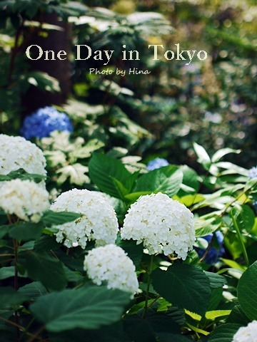 梅雨の晴れ間の、One Day in Tokyo_f0245680_10591359.jpg