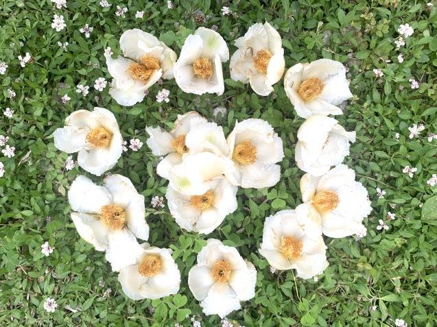 20210621 夏至の日沙羅双樹のお花とキャンドルナイト_d0145345_11455826.jpeg