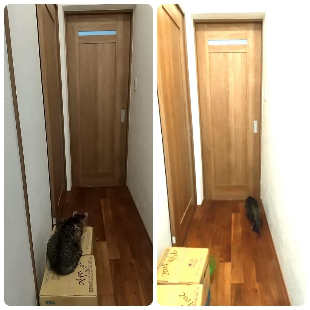 ドアの向こうには - なんくるないさ~、ワンッ!!