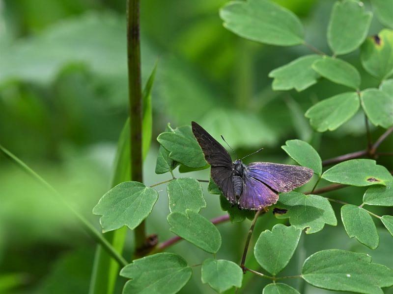 オカトラノオの花で_f0310988_11001607.jpg