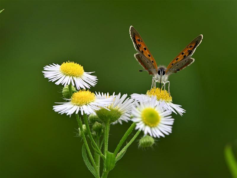 オカトラノオの花で_f0310988_11094460.jpg