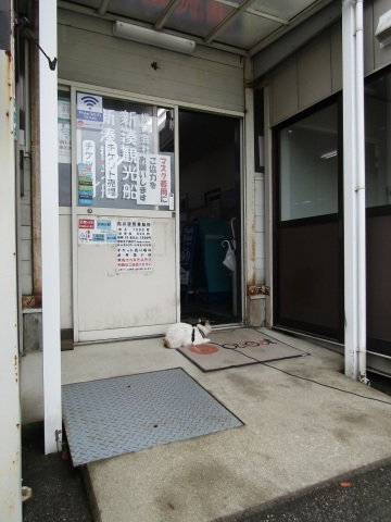 潮風の町・新湊で、ねこ歩き (前編)_f0281398_16295747.jpg
