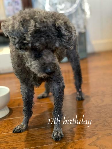 愛犬くりちゃんの17歳の誕生日に感謝を込めて。_a0213806_16513736.jpeg
