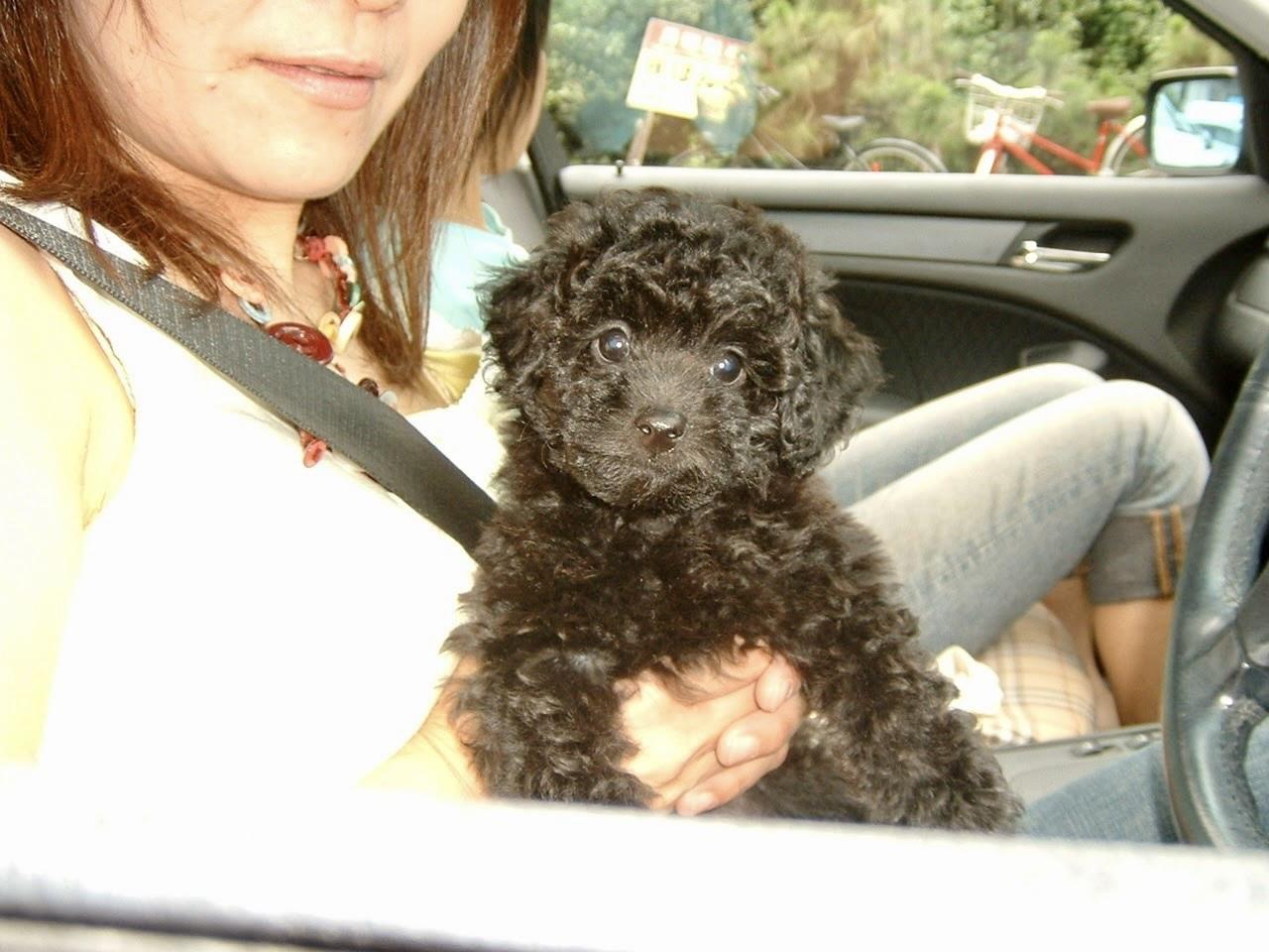 愛犬くりちゃんの17歳の誕生日に感謝を込めて。_a0213806_16523790.jpeg