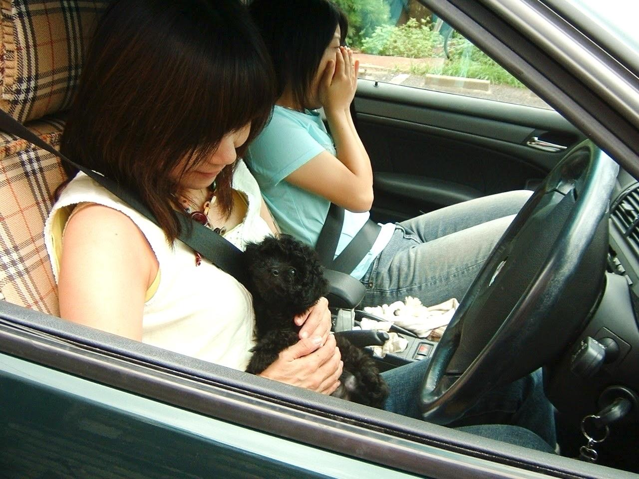 愛犬くりちゃんの17歳の誕生日に感謝を込めて。_a0213806_16525923.jpeg