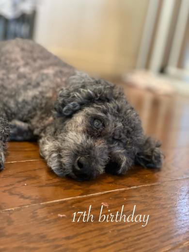 愛犬くりちゃんの17歳の誕生日に感謝を込めて。_a0213806_16534883.jpeg