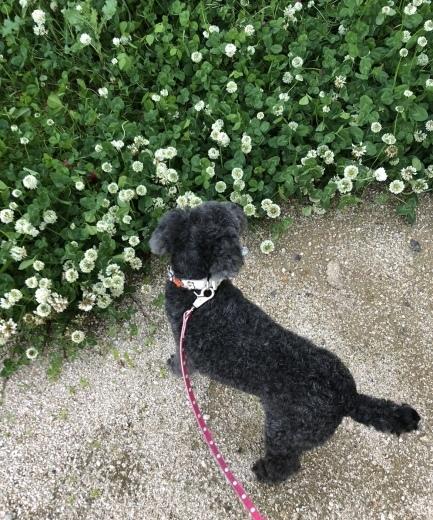 愛犬くりちゃんの17歳の誕生日に感謝を込めて。_a0213806_17072495.jpeg