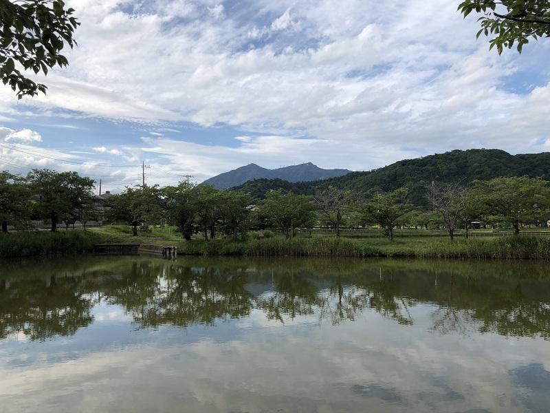 梅雨のおさんぽと薔薇_b0100229_14303065.jpg