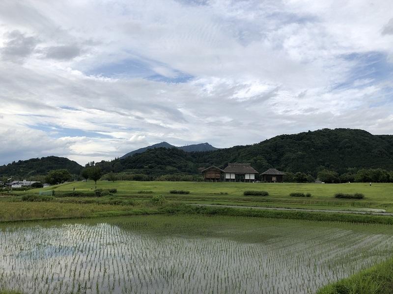 梅雨のおさんぽと薔薇_b0100229_14304476.jpg