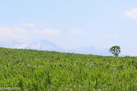 新緑の就実の丘と~2021年6月_d0340565_20351012.jpg
