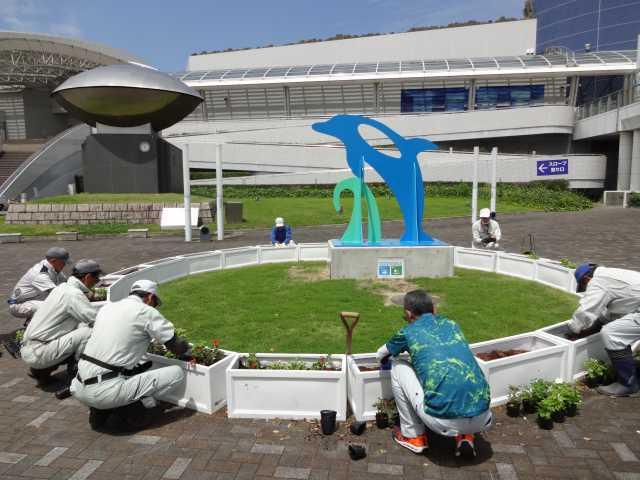 名古屋港水族館前のプランター花壇の管理をはじめました!_d0338682_08202036.jpg