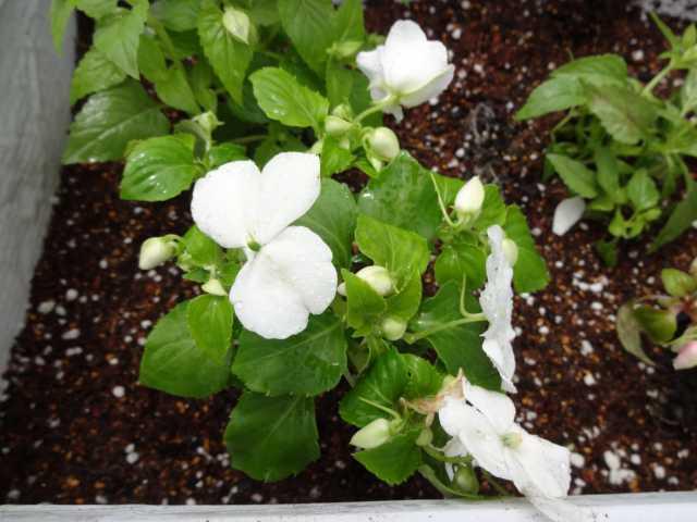 名古屋港水族館前のプランター花壇の管理をはじめました!_d0338682_08223485.jpg