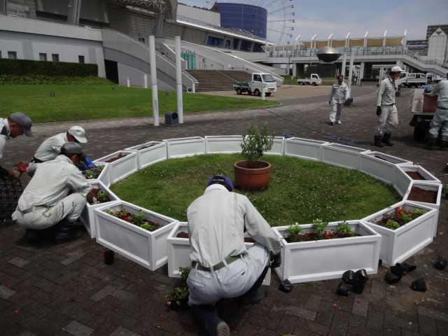名古屋港水族館前のプランター花壇の管理をはじめました!_d0338682_08273595.jpg