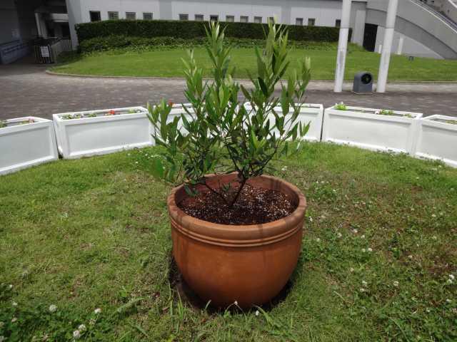名古屋港水族館前のプランター花壇の管理をはじめました!_d0338682_08321263.jpg