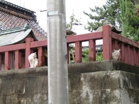 潮風の町・新湊で、ねこ歩き(後編)_f0281398_21013896.jpg