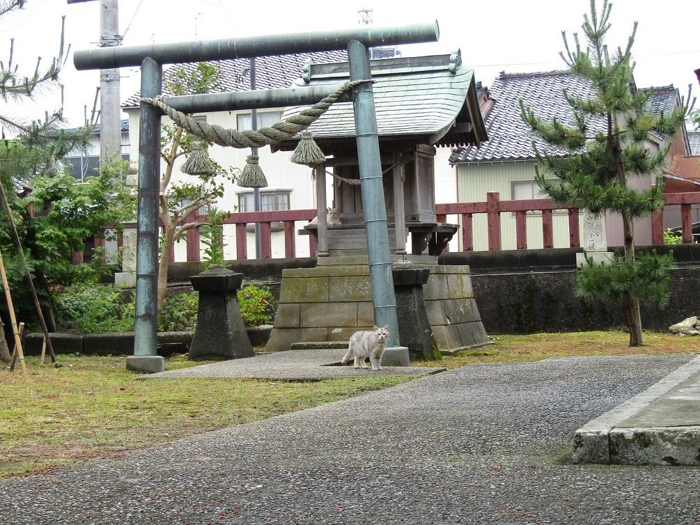 潮風の町・新湊で、ねこ歩き(後編)_f0281398_21070380.jpg