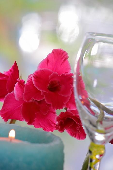 花の命は短くとも_f0083400_15582810.jpg
