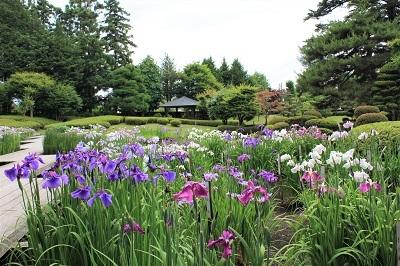 藤田記念庭園のハナショウブ_2021.06.24撮影_d0131668_17564400.jpg
