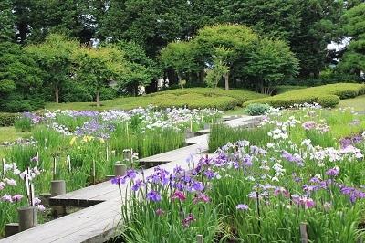 藤田記念庭園のハナショウブ_2021.06.24撮影_d0131668_17583777.jpg